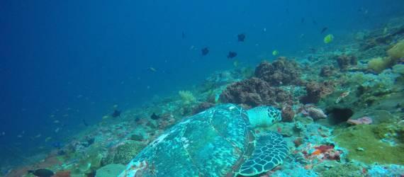 Begini Pengaruh Nyepi terhadap Laut dan Penghuninya