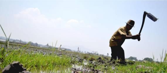Kebijakan dan Kelola Hutan yang Baik, Kunci Hindarkan Bencana Ekologis Perubahan Iklim