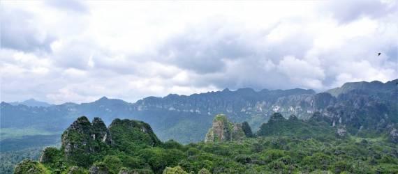 Rupanya Lukisan Figuratif Satwa Tertua di Dunia Ada di Kalimantan Timur
