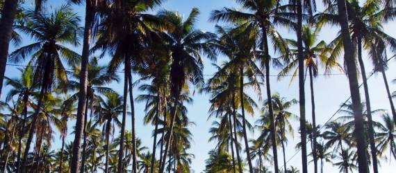Flores Itu Bukan Hanya Pulau Komodo dan Danau Kelimutu