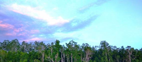 Adat Sasi, Tradisi Adat Penjaga Kelestarian Alam Turun-Temurun Dari Papua