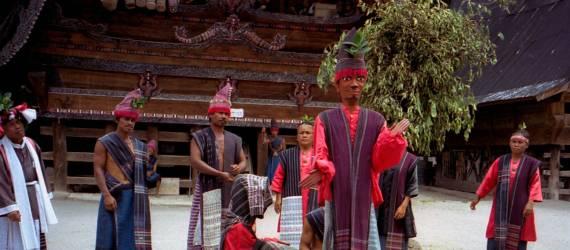 Berkenalan Dengan Marga Sigale-gale, Jenis Kodok Baru di Sumatra