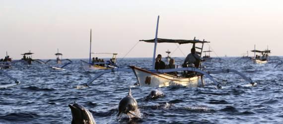 Mengejar Lumba-lumba di Habitat Alaminya
