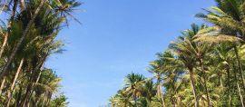 Jawa Timur juga Punya Sungai Amazon
