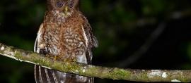 1,666 Spesies Burung Indonesia. Keempat Terkaya di Dunia