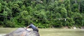 365Indonesia Hari 13: Memandikan Gajah di Tangkahan, Sumatera Utara