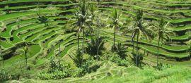 Keindahan Ubud Masuk Daftar Destinasi Terbaik Dunia 2016