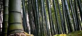Ngelmu Pring, Makna Filosofis Pohon Bambu dalam Pandangan Hidup Orang Jawa