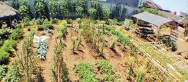Begini Inovasi Urban Farming dari Kelurahan Cisaranten Kidul, Bandung