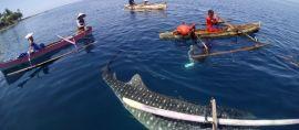 Berenang, Menyelam bersama Paus Raksasa di Gorontalo