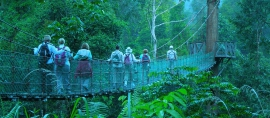 Buah Buah Asli Kalimantan