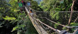 Canopy Bridge Kedua di Asia dari Bukit Bengkirai