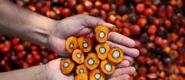 Indonesia Kuasai Pasar Permintaan Minyak Sawit di Pakistan