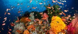 Tempat Diving Terbaik di Dunia Ada di Indonesia