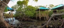 Gonda Mangrove Park