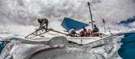Penyelamatan Hiu Paus Papua yang Terperangkap Jaring Ikan