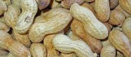 kuliner kacang tanah