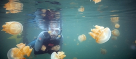 Jellyfish Lake in Kakaban Island