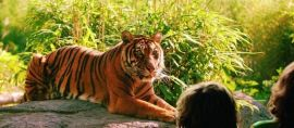Kini Pengunjung Bisa Mengawasi Kualitas Kebun Binatang Lewat Aplikasi Ini