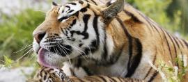 Masihkah kita Macan Asia? (bag II)