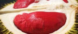 Mencicipi Durian Merah Bocking, Durian Merah Pelangi dan Durian Grafika Khas Banyuwangi