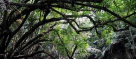 Menyusuri Cigenter, Merasakan Sensasi 'Amazon'