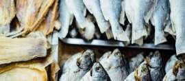 Obat Luka Bakar Dari Kulit Ikan Karya Universitas Negeri Yogyakarta
