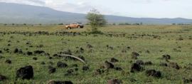 Ombak Kidal, Gajah Mada, dan Africa van Samawa