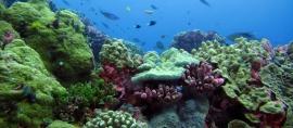 Sejuta Terumbu Karang untuk Lautan Indonesia
