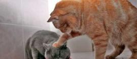 Siswi ini Harumkan Indonesia Berkat Idenya Tentang Pakan Kucing Peliharaan
