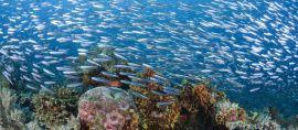 Hari Segitiga Karang Dunia 2016 Ajak Masyarakat Peduli Polusi Sampah Plastik di Laut