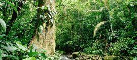 Satwa Aneh dari Dunia Dongeng. Hanya Ada di Sulawesi