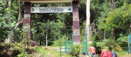 9 Fakta Tentang Taman Nasional Gunung Leuser Yang Menarik Perhatian Dunia