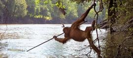 The Green Way to see Sumatra's Orangutans