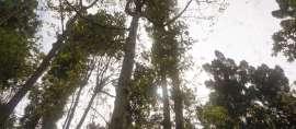 Tuban Melakukan Hal Luar Biasa, Raih Rekor Dunia