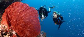 Inilah 7 Tempat Diving Terbaik di Indonesia