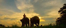 Hore! Taman Nasional Kebanggan Lampung ini Jadi Taman Warisan ASEAN