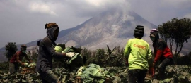 Yes2Do: Cultivating Sustainable Development in Mt Sinabung After Powerful Eruptions
