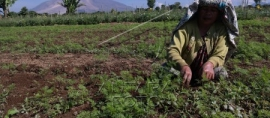 Yes2Do: Empowering Women To Rescue the Land that Sustains Us