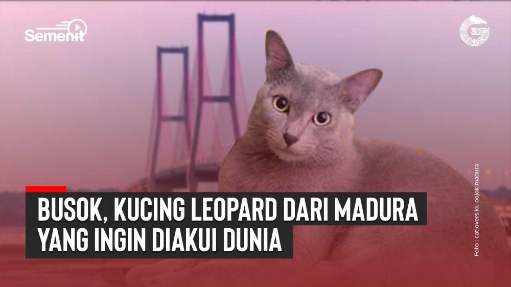 Busok, Kucing Leopard dari Madura yang Ingin Diakui Dunia | Good News From Indonesia