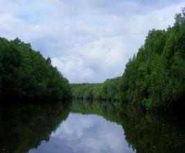 wisata_mangrove_bedul_banyuwangi_jpgthumb1