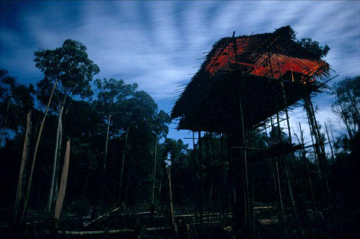 korowai-tree-house-85