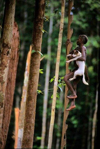 korowai-tribe-tree-house