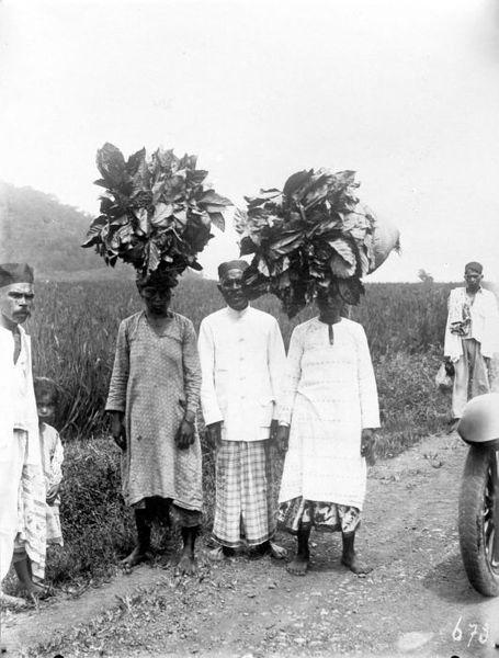 455px-collectie_tropenmuseum_mannen_dragen_geoogste_arabica_koffiebladeren_voor_de_bereiding_van_kopi_daoen_op_het_hoofd_aan_sumatras_westkust_tmnr_10012121