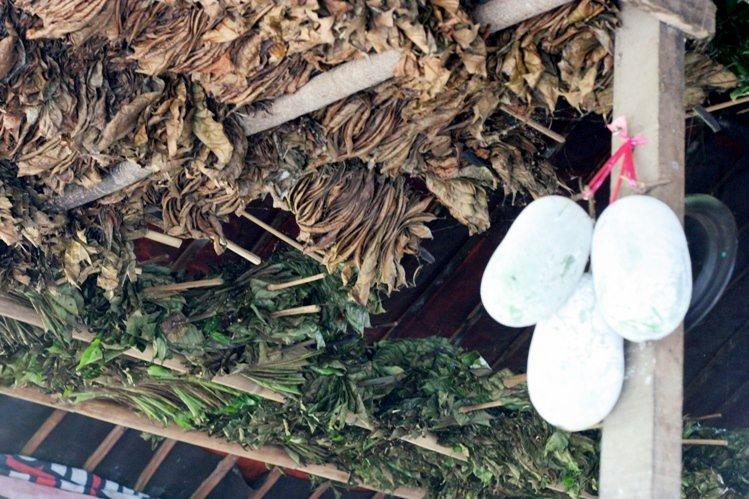 daun-daun-kopi-dalam-proses-pengeringan