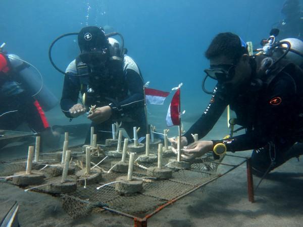 sejuta koral