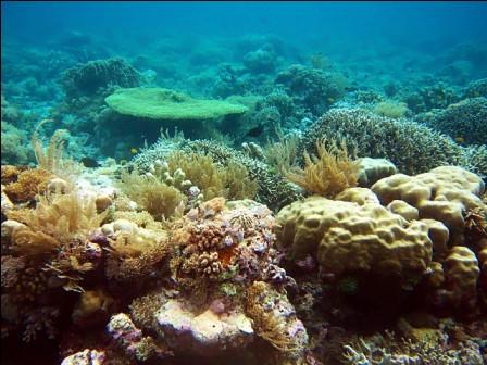 Spot Kaldera, salah satu diving spot di Taka Bonerate