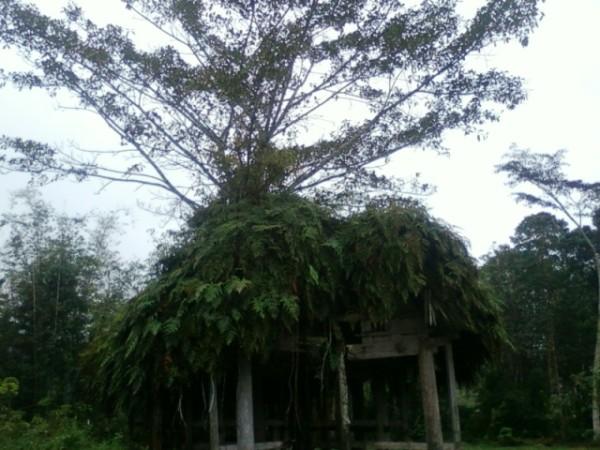 1. Atap Tongkonan
