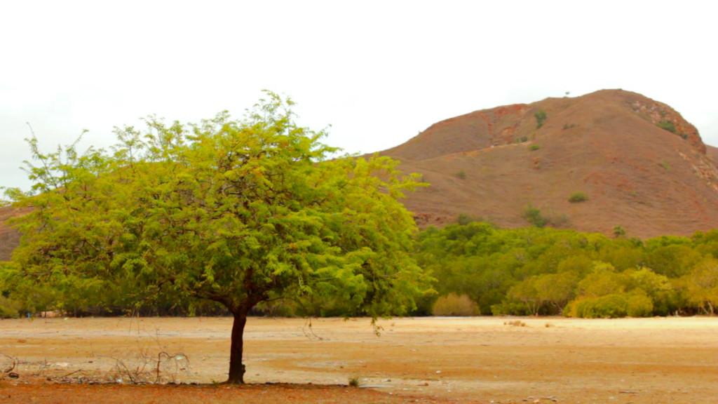 Hamparan tanah yang akan terendam ketika laut pasang di Pulau Rinca (Foto: Bagus DR / GNFI)