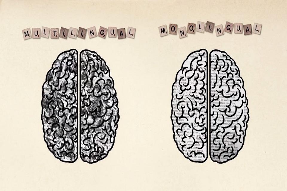 Perbedaan Otak Manusia Multilingual dan Monolingual (Sumber gambar: creationsbycrouch.wordpress.com)